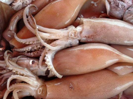 кальмара мясо фото