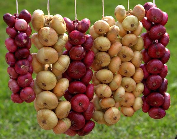 Рецепты маринованного лука